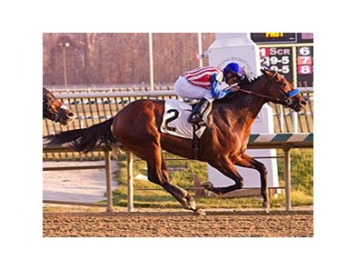 Brigand leads the way in the City of Laurel Stakes.