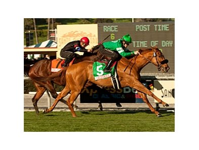 "Caracortado takes the Sunshine Millions Turf under Joe Talamo.<br><a target=""blank"" href=""http://www.bloodhorse.com/horse-racing/photo-store?ref=http%3A%2F%2Fpictopia.com%2Fperl%2Fgal%3Fprovider_id%3D368%26ptp_photo_id%3D9387851%26ref%3Dstory"">Order This Photo</a>"