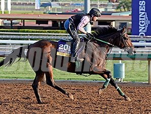 Don't Tell Sophia Breeders' Cup 2014