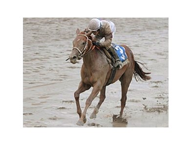 "Le Mi Geaux splashes down the track in the Schuylerville on opening day at Saratoga.<br><a target=""blank"" href=""http://www.bloodhorse.com/horse-racing/photo-store?ref=http%3A%2F%2Fpictopia.com%2Fperl%2Fgal%3Fprovider_id%3D368%26ptp_photo_id%3D9116370%26ref%3Dstory"">Order This Photo</a>"