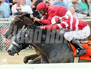 Signficant Bling wins the 2012 Mountaineer Juvenile.