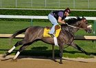 Win Willy, seen here on April 27, will not run in the Kentucky Derby.