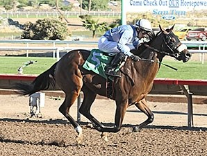 Lazy Daisy May wins the 2013 ATBA Fall Sales Stakes Fillies Division.