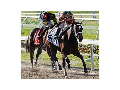 "Proud Spell winning the Fair Grounds Oaks (gr. II)<br><a target=""blank"" href=""http://www.bloodhorse.com/horse-racing/photo-store?ref=http%3A%2F%2Fpictopia.com%2Fperl%2Fgal%3Fprovider_id%3D368%26ptp_photo_id%3D3811576%26ref%3Dstory"">Order This Photo</a>"