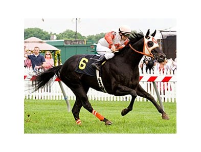 Ben's Cat won the Jim McKay Turf Sprint Stakes in 2011.