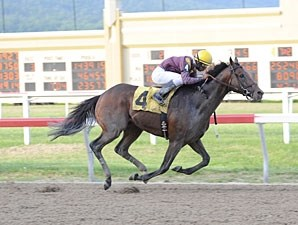 Easter Gift wins the 2013 Mountainview Handicap.