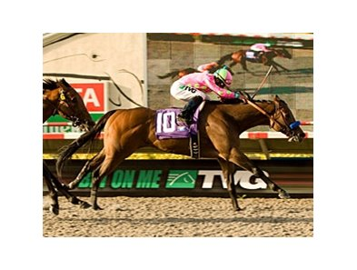 "El Brujo takes the Pat O'Brien under  Joel Rosario.<br><a target=""blank"" href=""http://www.bloodhorse.com/horse-racing/photo-store?ref=http%3A%2F%2Fpictopia.com%2Fperl%2Fgal%3Fprovider_id%3D368%26ptp_photo_id%3D9162331%26ref%3Dstory"">Order This Photo</a>"