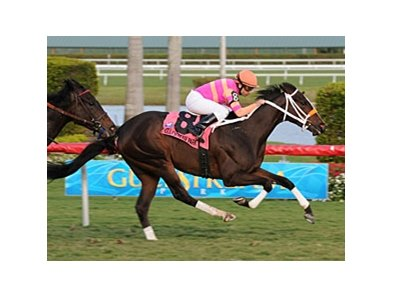 "In the Rough registered her first stakes win in the Coconut Grove over the Gulfstream Park turf.<br><a target=""blank"" href=""http://www.bloodhorse.com/horse-racing/photo-store?ref=http%3A%2F%2Fpictopia.com%2Fperl%2Fgal%3Fprovider_id%3D368%26ptp_photo_id%3D8793581%26ref%3Dstory"">Order This Photo</a>"