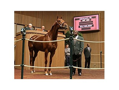 Groupie Doll brought $3.1 million at the Keeneland November breeding stock sale.