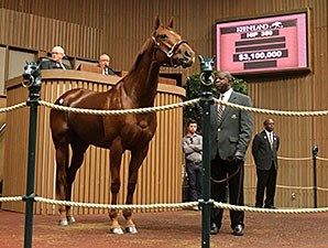 Groupie Doll at the 2013 Keeneland November Breeding Stock Sale.