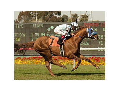 Dhaamer won the May 13 Round Table Stakes by 4 1/2 lengths.