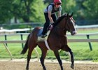 "Zetterholm at Pimlico<br><a target=""blank"" href=""http://photos.bloodhorse.com/TripleCrown/2012-Triple-Crown/Preakness-Stakes-137/23013252_TrG3NS#!i=1852403122&k=8SkN56P"">Order This Photo</a>"