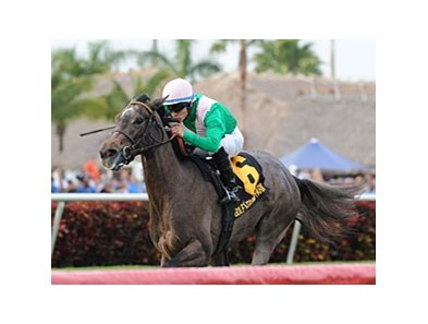 "Tuttipaesi won the Ginger Brew Stakes on Jan 1 at Gulfstream.<br><a target=""blank"" href=""http://photos.bloodhorse.com/AtTheRaces-1/at-the-races-2013/27257665_QgCqdh#!i=2299757759&k=T5D88Lj"">Order This Photo</a>"