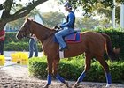 "Animal Kingdom<br><a target=""blank"" href=""http://www.bloodhorse.com/horse-racing/photo-store?ref=http%3A%2F%2Fpictopia.com%2Fperl%2Fgal%3Fprovider_id%3D368%26ptp_photo_id%3D9798142%26ref%3Dstory"">Order This Photo</a>"