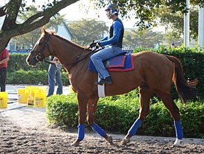 Animal Kingdom at Palm Meadows, January 12, 2012.
