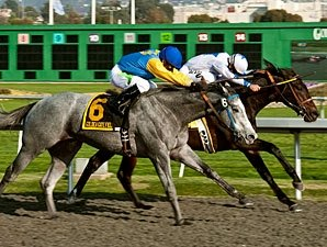 Seven Sophomores Vie in California Derby