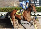 "Buddy's Saint cruised to an impressive victory in the Remsen.<br><a target=""blank"" href=""http://www.bloodhorse.com/horse-racing/photo-store?ref=http%3A%2F%2Fpictopia.com%2Fperl%2Fgal%3Fprovider_id%3D368%26ptp_photo_id%3D8659018%26ref%3Dstory"">Order This Photo</a>"