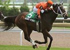 Heros Reward gets his third win on the Woodbine Turf in the Scotts Highlander Stakes (Can-III) June 22.
