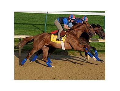 Adriano was one of several Derby hopefuls to work out at Churchill Downs Sunday morning.