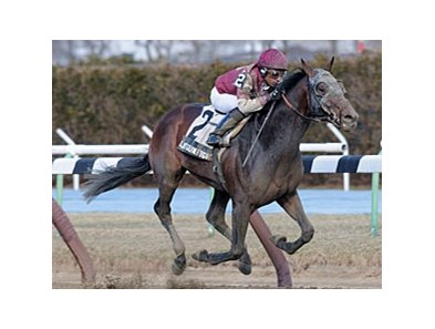 "Last Gunfighter gets up late to win the Excelsior Stakes.<br><a target=""blank"" href=""http://photos.bloodhorse.com/AtTheRaces-1/at-the-races-2013/27257665_QgCqdh#!i=2422047614&k=6Xbb7n3"">Order This Photo</a>"