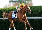 "Wise Dan has won three straight graded stakes including the Shadwell Turf Mile.<br><a target=""blank"" href=""http://photos.bloodhorse.com/AtTheRaces-1/at-the-races-2012/22274956_jFd5jM#!i=2134788413&k=Ggh9WCp"">Order This Photo</a>"