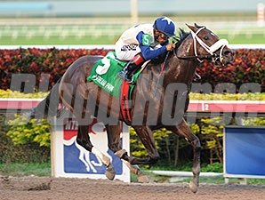 Falling Sky wins the 2014 Gulfstream Park Sprint.