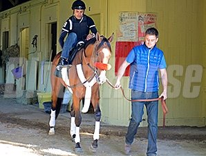 Goldencents at Belmont Park June 2.