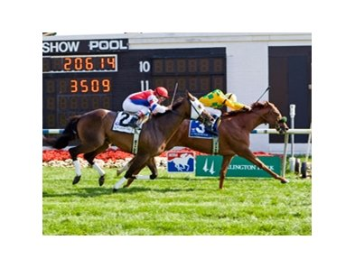 Free Fighter outfought favorite Brass Hat through a long stretch battle to produce a half-length victory in the  Stars and Stripes Turf Handicap at Arlington Park.