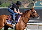 "Wise Dan gallops at Santa Anita on Oct. 31. <br><a target=""blank"" href=""http://photos.bloodhorse.com/BreedersCup/2013-Breeders-Cup/Breeders-Cup/32986083_QMHXWK#!i=2873637437&k=fz5KvPK"">Order This Photo</a>"