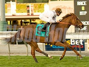 Cat by the Tale wins the 2010 San Gorgonio.