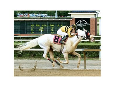 Chief White Fox breaking his maiden at Mountaineer on July 1.