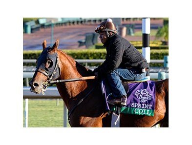 "Coil<br><a target=""blank"" href=""http://photos.bloodhorse.com/BreedersCup/2012-Breeders-Cup/Works/26130247_gxH6nS#!i=2182615801&k=46cbTHN"">Order This Photo</a>"