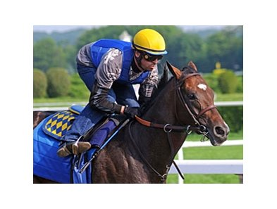 "Paynter worked 5 furlongs at Belmont on May 27.<br><a target=""blank"" href=""http://photos.bloodhorse.com/AtTheRaces-1/at-the-races-2012/22274956_jFd5jM#!i=1878339152&k=w93n7cS"">Order This Photo</a>"