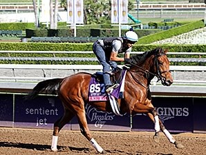 Lady Eli - Breeders' Cup 2014