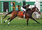Optimizer won the Colonel E. R. Bradley Handicap on Jan. 26.