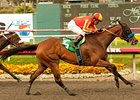 Irish Gypsy wins the Desert Storm Handicap.