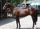 Hip 33, a colt by Medaglia d'Oro out of the stakes-winning A.P. Indy mare Crystal Current