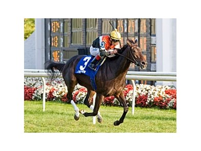 Marketing Mix, who is based at Arlington, won the 2011 Pucker Up Stakes over the course.