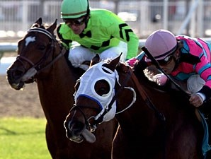 Chamberlain Bridge wins the 2011 Bonapaw Stakes.