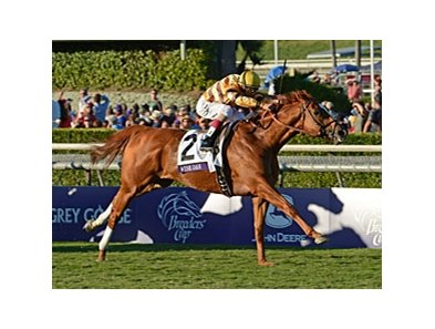 "Wise Dan is one of the candidates for Horse of the Year.<br><a target=""blank"" href=""http://photos.bloodhorse.com/BreedersCup/2012-Breeders-Cup/Mile/26128708_Rzcb63#!i=2194068419&k=t8cRH2T"">Order This Photo</a>"