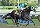 Zayat Pair to Tangle in Forego Stakes
