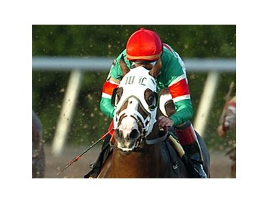 Silver Edition takes on six challengers in the Swale Stakes (gr. II) Feb. 2 at Gulfstream Park.