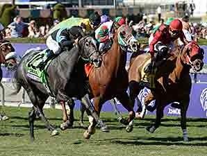 Mizdirection Horse Profile Bloodhorse