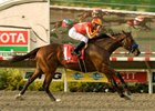 "Even-money choice Lookin at Lucky remained unbeaten in three starts and gave trainer Bob Baffert his 9th win in the Del Mar Futurity.<br><a target=""blank"" href=""http://www.bloodhorse.com/horse-racing/photo-store?ref=http%3A%2F%2Fpictopia.com%2Fperl%2Fgal%3Fprovider_id%3D368%26ptp_photo_id%3D8462032%26ref%3Dstory"">Order This Photo.</a>"