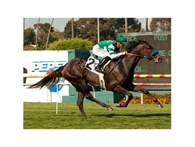 Lady of Shamrock won last year's American Oaks at the Santa Barbara distance.