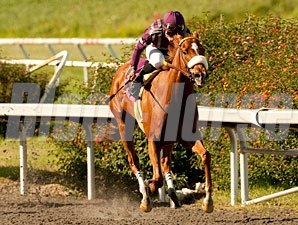 Miles Rules in the 2011 Melair Stakes.