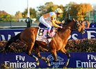 "Dangerous Midge and Frankie Dettori cruise home in the Breeders' Cup Turf.<br><a target=""blank"" href=""http://www.bloodhorse.com/horse-racing/photo-store?ref=http%3A%2F%2Fpictopia.com%2Fperl%2Fgal%3Fprovider_id%3D368%26ptp_photo_id%3D9267449%26ref%3Dstory"""