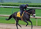 Arkansas Derby winner Gayego working at Churchill Downs on April 26.