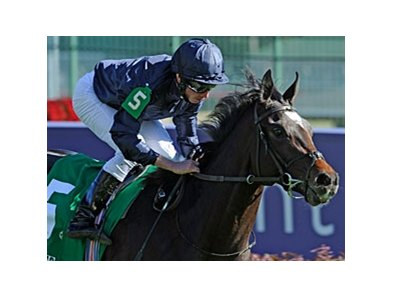 2011 Breeders' Cup Juvenile Turf winner Wrote