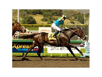 "Santa Anita Derby winner Pioneerof the Nile heads the west coast contingent for the Kentucky Derby. <br><a target=""blank"" href=""http://www.bloodhorse.com/horse-racing/photo-store?ref=http%3A%2F%2Fgallery.pictopia.com%2Fbloodhorse%2Fgallery%2FS637785%2Fphoto%2F7980443%2F%3Fo%3D1"">Order This Photo</a>"
